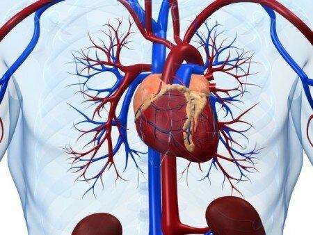 первая фаза инфаркта