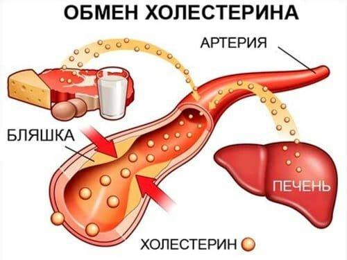 схема образования холестерина