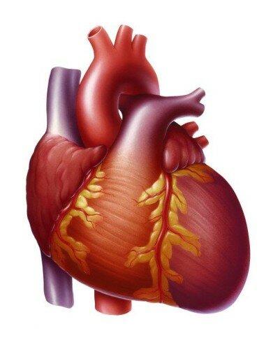 симптоматика сердечной недостаточности у женщин