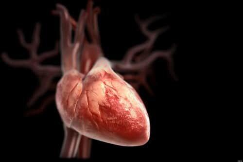 Диагноз бычье сердце